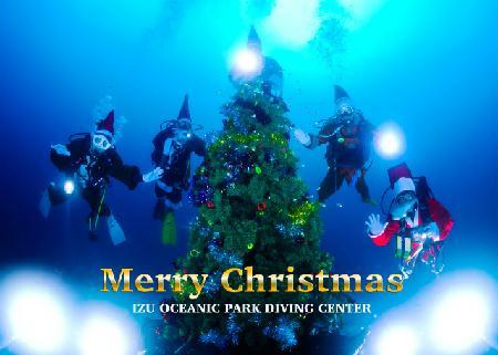 伊豆海洋公園の海中クリスマスツリー