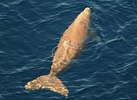 WWF沖縄ジュゴン20070725e.jpg