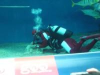 1129inoki1.jpg アントニオ猪木 サンゴの移植