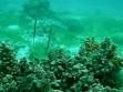 20080628hekoayu.jpg セブ・ナルスアン島 ヘコアユのペア