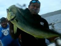 釣り上げたマヒマヒという魚