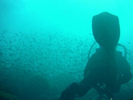 伊豆・井田の魚の群れとダイバー