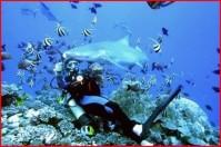 diving20080527.JPG